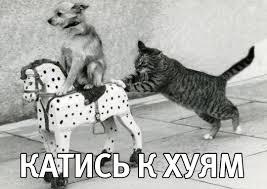 katis