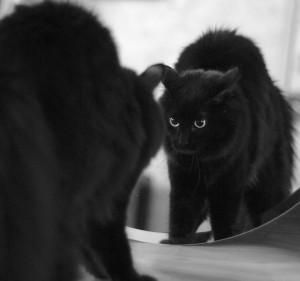 котэ-отражение-зеркало-765760