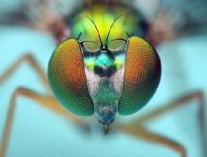 1249823438_fly_brain_big